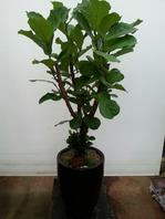 떡갈나무ABC